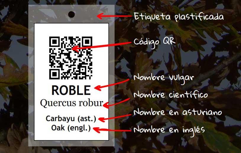 arboles06